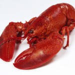 Large Seafood Company testimonial